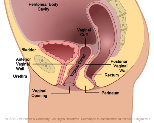 Pelvic-Floor-Anatomy-No-Uterus1